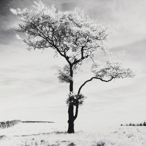 Lone Tree # 3, Peak District, England von Dave Butcher
