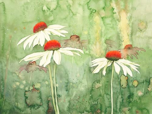 Echinacea one von Clema