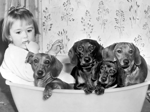 Dallas Gilby with dogs von Anonym