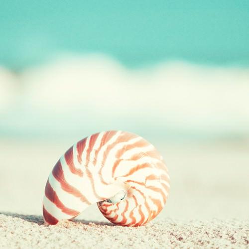 Nautilus von Carolyn Cochrane