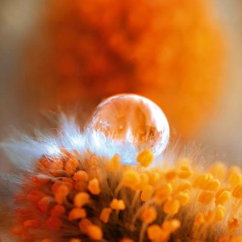 Eternal Flame von Lily Andrea Seidel