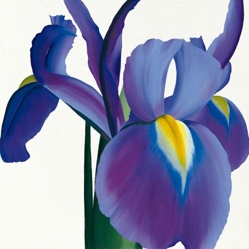 Iris von Stephanie Andrew