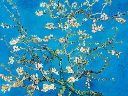 Almond Blossom San Remy 1890 von Vincent van Gogh