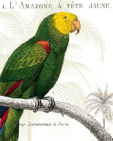 Parrot Botanique I von Wild Apple Portfolio