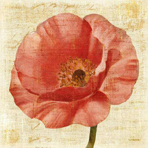 Blushing Poppy on Cream von Albena Hristova