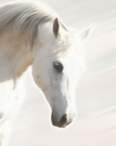 Pegasus III von Kari Brooks
