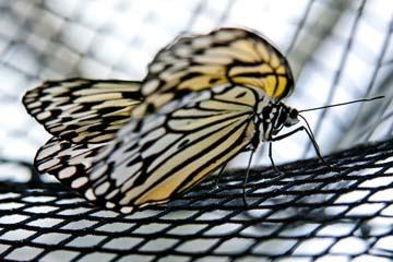 Butterfly Beauties II von Florian Dürmer