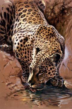 Leopard's Sundowner von Renato Casaro