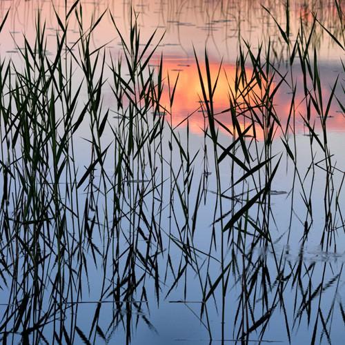 Summer Reed von Hans Strand