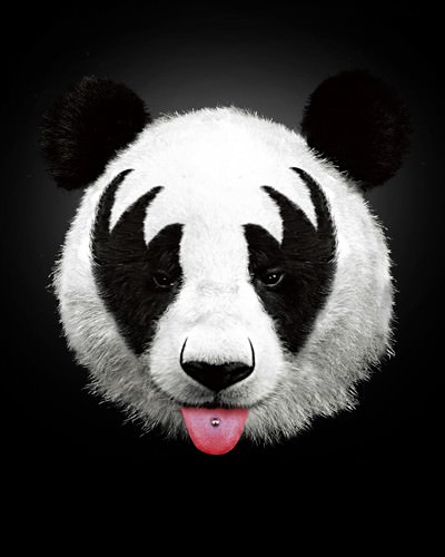 Panda Rocks von Robert Farkas