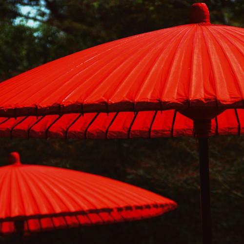 Red protection von Matthias Weber