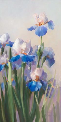 Iris French Cancan von Sylvie Vernageau