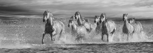 Horses Running at the Beach von Jorge Llovet