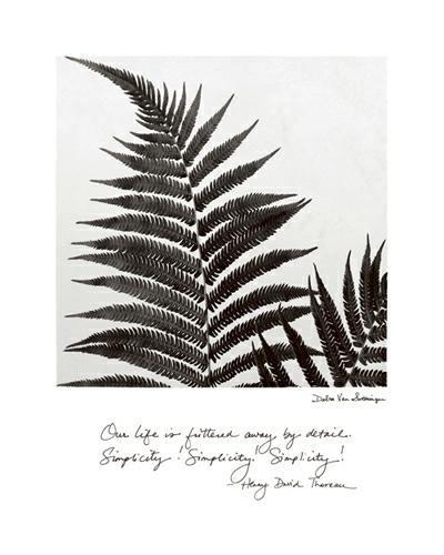 Delicate Ferns von Debra Van Swearingen