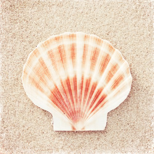 Scallop Shell von Carolyn Cochrane