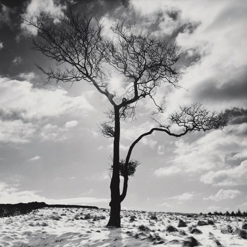 Lone Tree # 2, Peak District, England von Dave Butcher