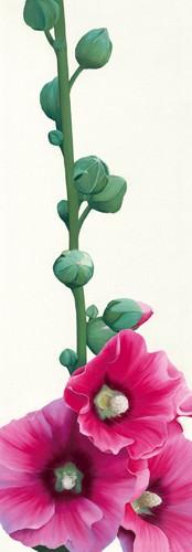Pink Hollyhock III von Stephanie Andrew