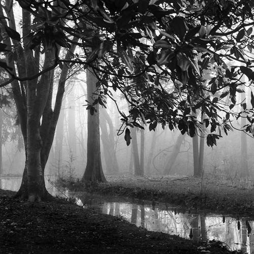 Woodland No. 1 von Nicholas Bell