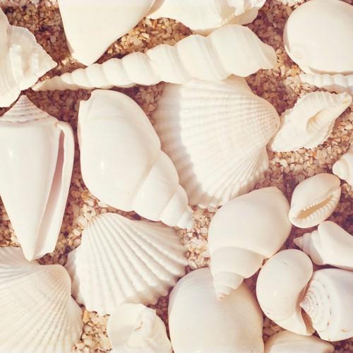 Beachcomber von Carolyn Cochrane
