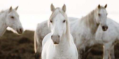 Horse Meeting von Jorge Llovet