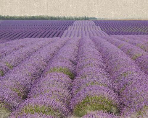 Lavender on Linen 2 von Bret Straehling