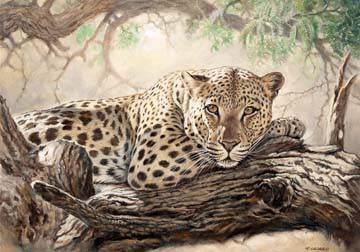 In the Acacia Tree von Renato Casaro