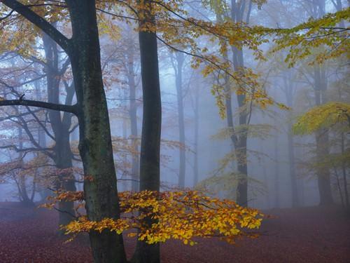 Autumn Forest von Hans Strand