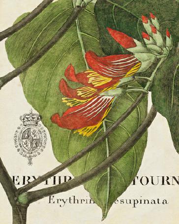 Botanique Tropicale I von Wild Apple Portfolio