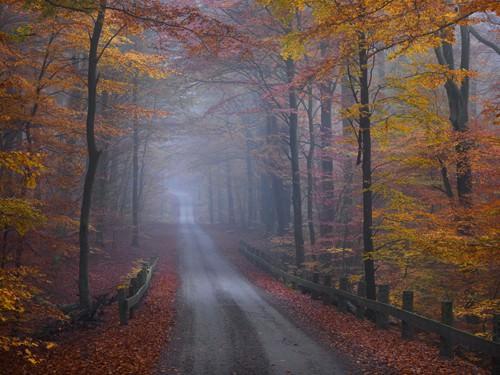 Misty Road von Hans Strand