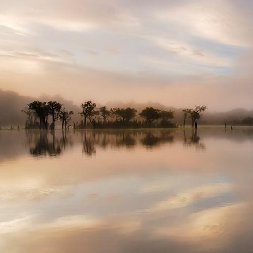 Dawn Mist on the Amazon von Andy Mumford