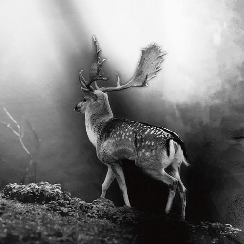 Wildwechsel von Uwe Steger