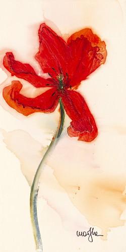 Tulipe III von Marthe