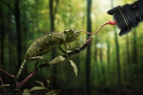 Just a Chameleon action shootinge? von John Wilhelm is a Photoholic