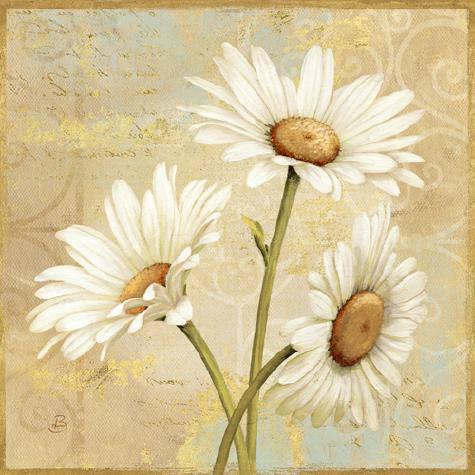 Beautiful Daisies II von Daphne Brissonnet