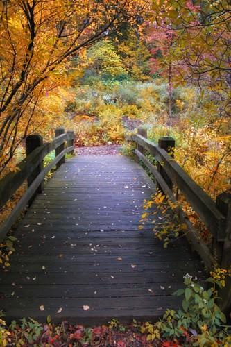 Bridge over Shallow Water von Jessica Jenny