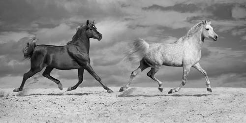 Horse Dancers von Jorge Llovet