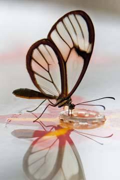 Butterfly Beauties III von Florian Dürmer