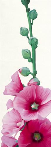 Pink Hollyhock II von Stephanie Andrew